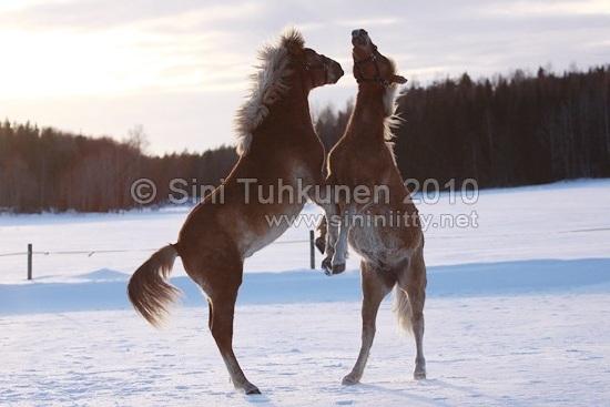 Photo by Sini Tuhkunen
