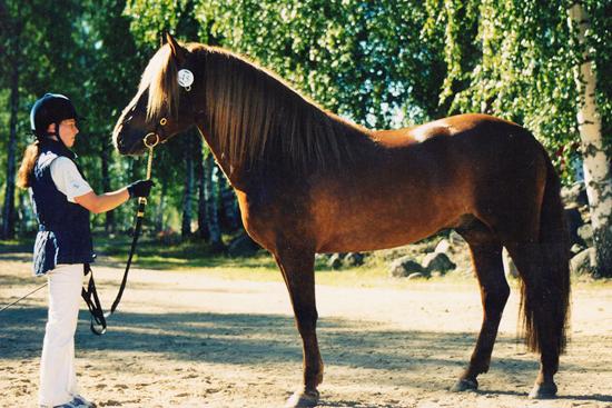 Sumiainen, photo by Sini Tuhkunen