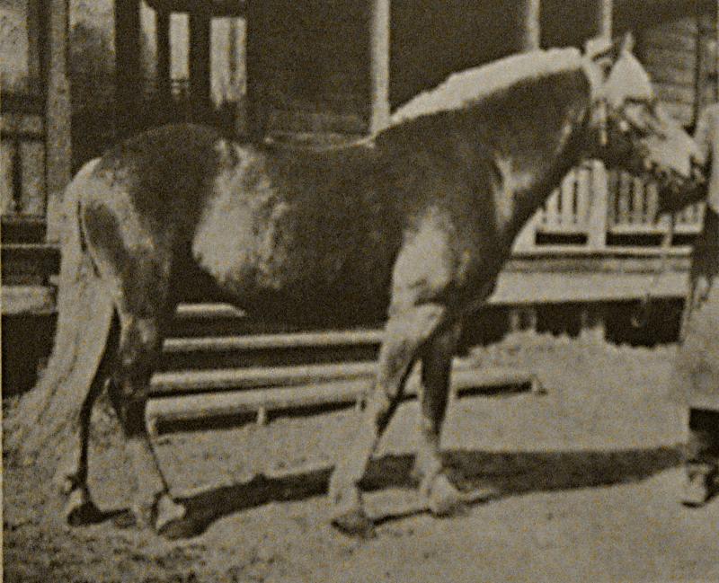 800px-Liinaharja_1910